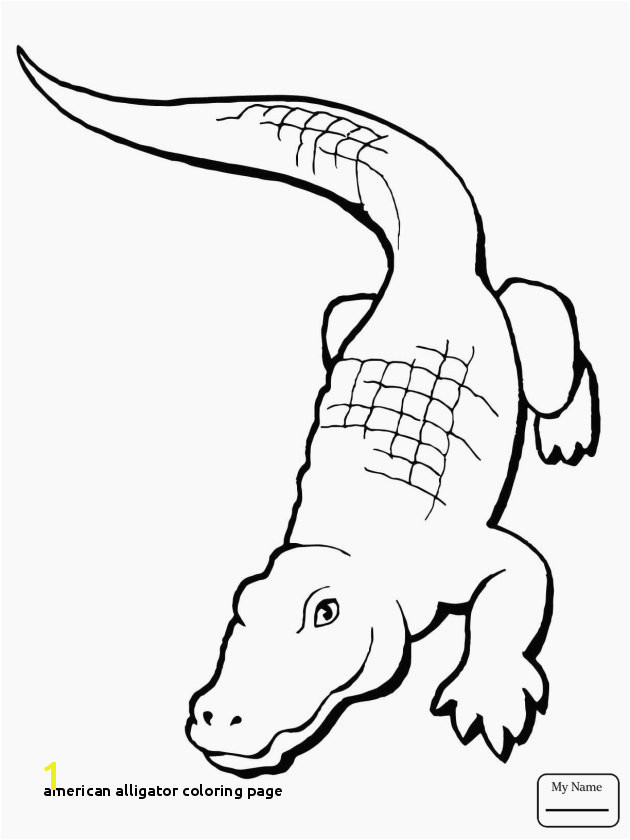 Fresh American Alligator Coloring Page Lovely Alligator Drawing Step