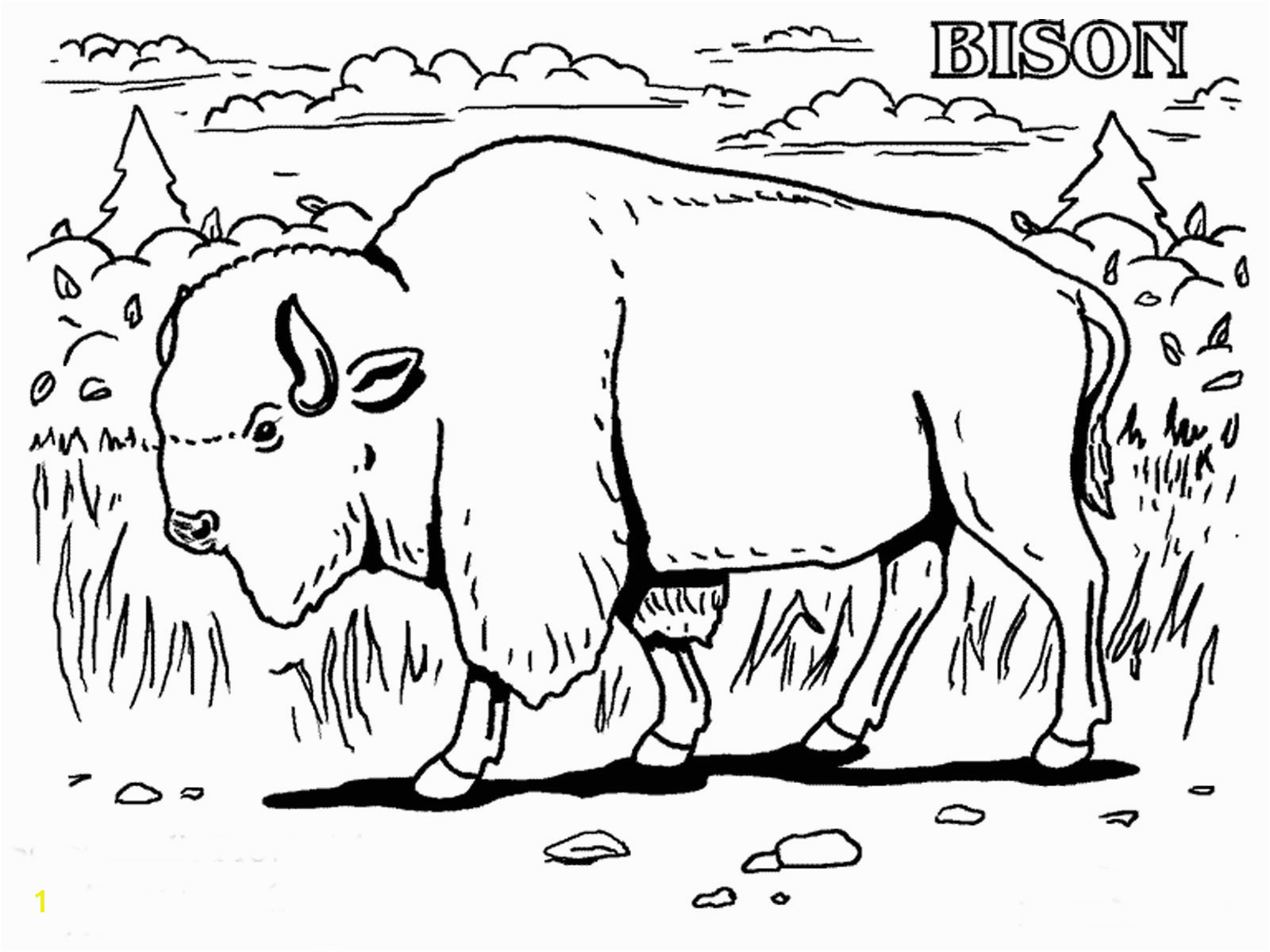 free printable bison coloring pages for kidsbison coloring pages