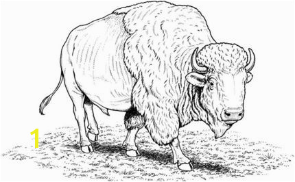 to see printable version of American buffalo bison coloring page