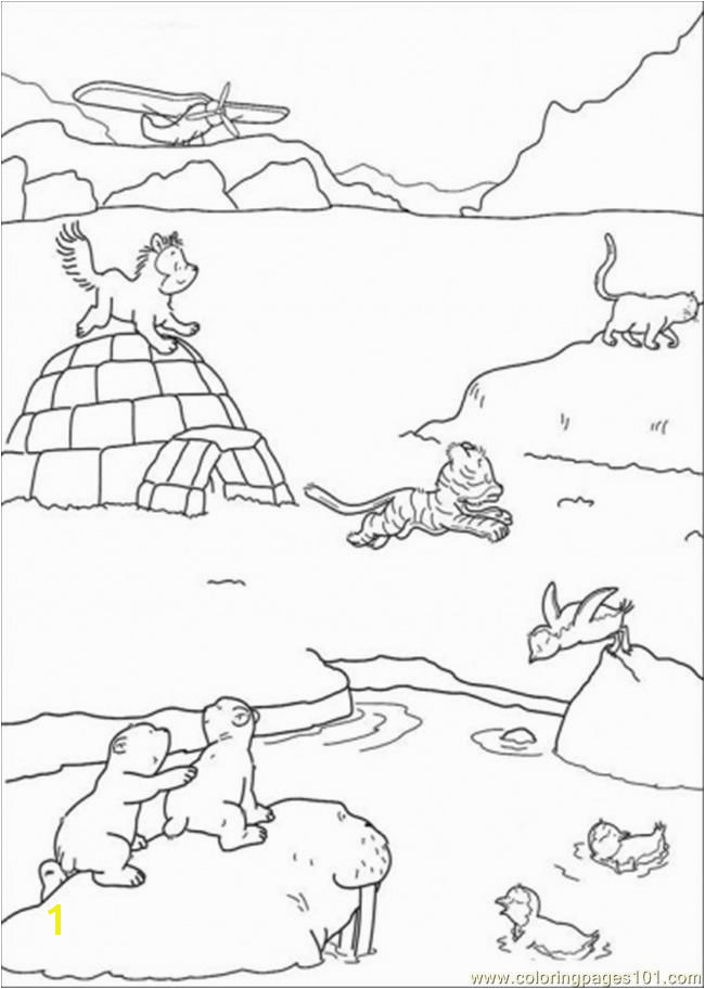 Polar Arctic Animals Coloring Pages