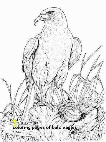 Coloring Pages Bald Eagles Eagle Coloring Pages Luxury Perched Golden Eagle Coloring Page