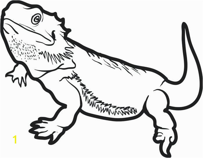 Bearded Dragon Coloring Pages toothless Coloring Pages High Quality Coloring Pages Free Easy