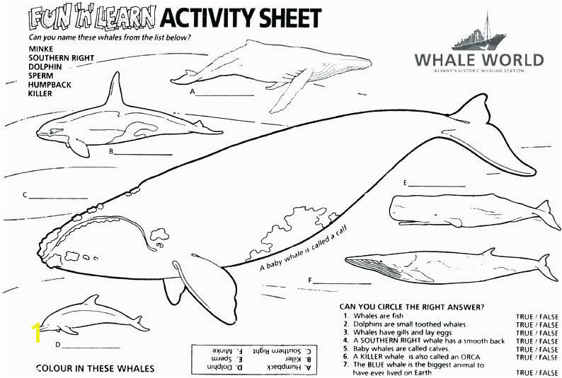 Orca Coloring Pages Awesome 50 Precious Killer Whale Coloring Pages Dannerchonoles Orca Coloring Pages New