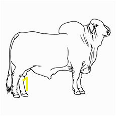 15 Best Bucking Bull Coloring Pages