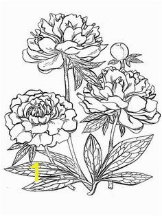 Peony Flower coloring pages Download and print Peony Flower Peony Drawing