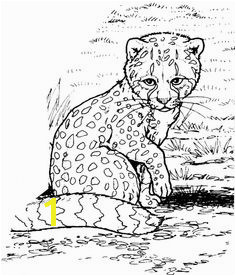Cheetah Running Coloring Pages 49 Best Cheetah Education Images On Pinterest
