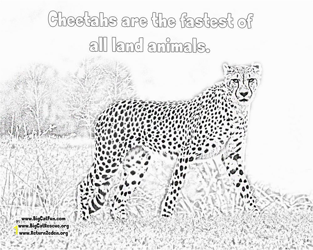 line Cheetah Coloring Pages