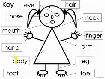 Parts of the Body and Face Posters and Worksheets TpT Misc Lessons Pinterest