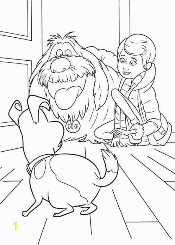 29 coloring pages of Secret Life of Pets on Kids n Fun Op Kids n Fun vind je altijd de leukste kleurplaten het eerst