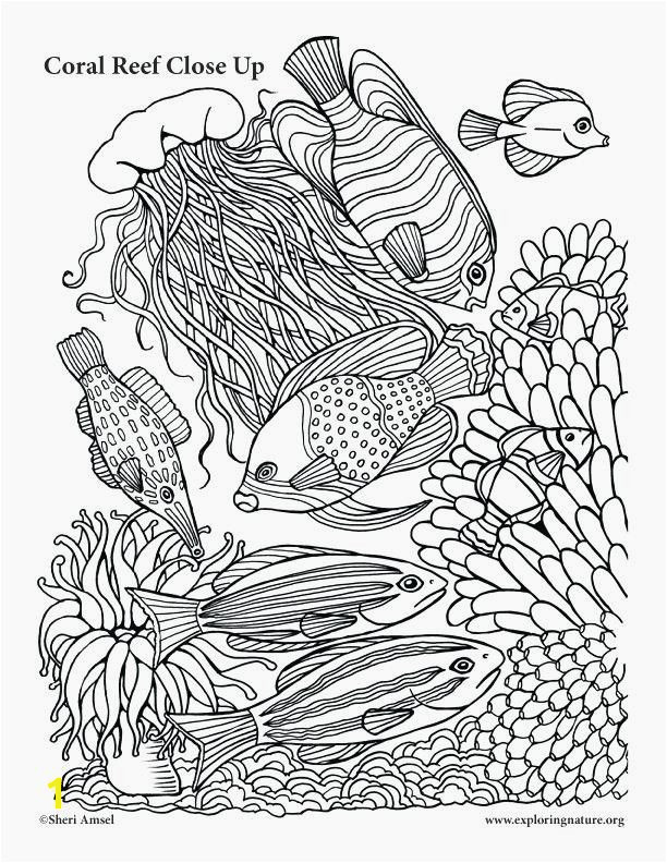 Coloring Pages Coral Reefs