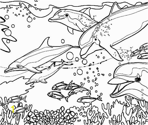 Dolphin Coloring Pages Coral Reef Fish Dolphin Coloring PagesFull