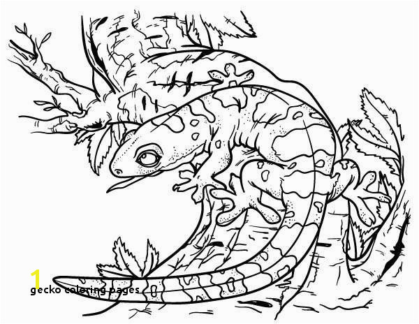 Gecko Coloring Pages Beautiful 11 Best Color Me Happy Water