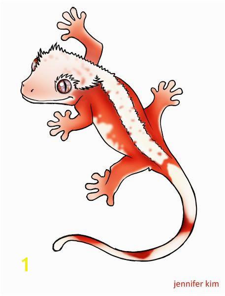 Image result for crested gecko morphs