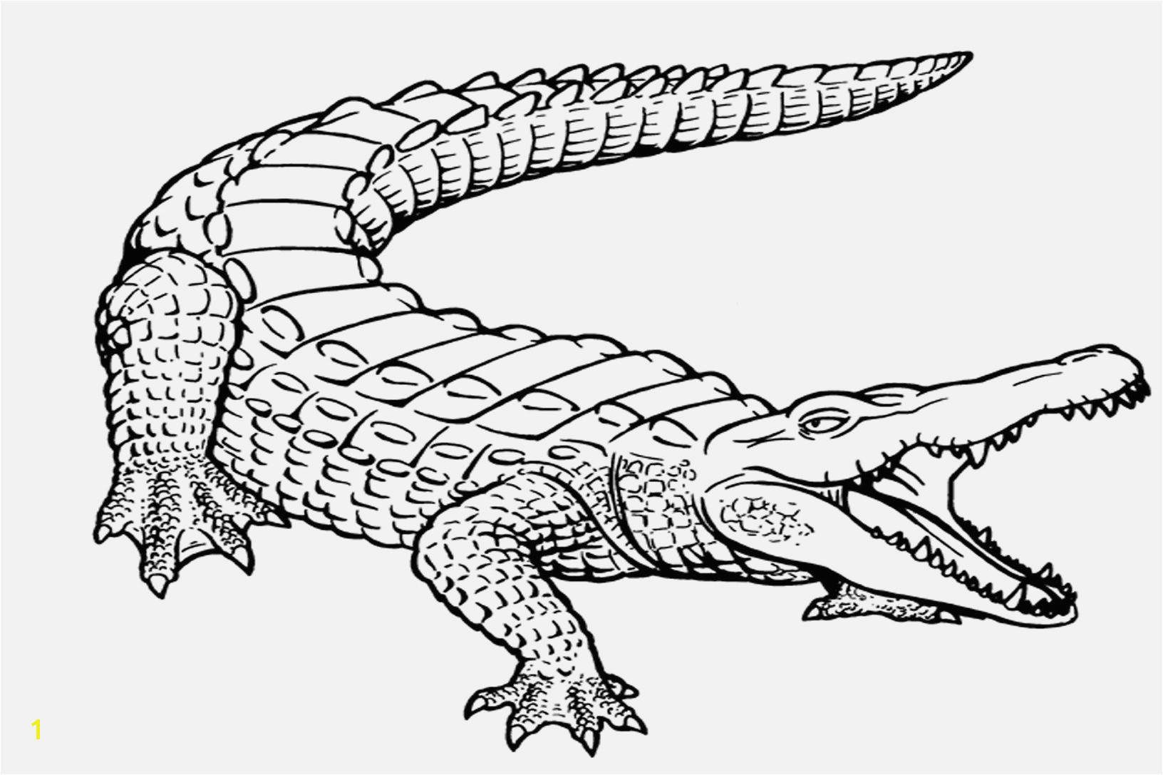 Alligator Coloring Pages Printable Coloring Pages Free Printable Alligator Coloring Pages for Kids