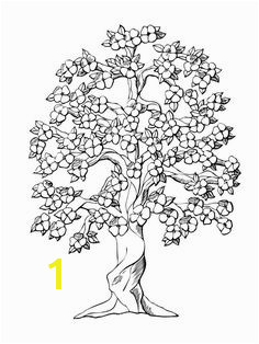 Dogwood Tree Coloring Page 52 Best Trees Coloring Sheets Images