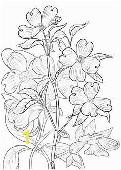 Flowering Dogwood Coloring page Printable Crafts Free Printables Free Printable Coloring Pages Pattern