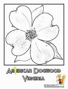 Flower Coloring Pages States Penn Wyoming USA Islands