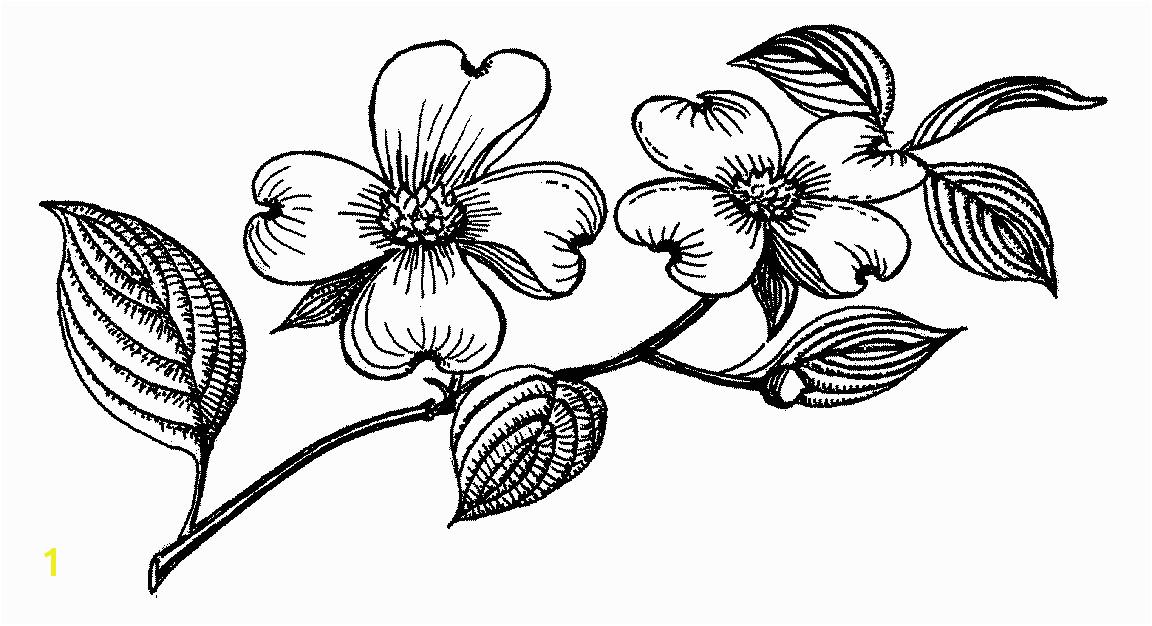 Flowering Flowering Dogwood Tree Drawing Flower Flower 19 Clip Art