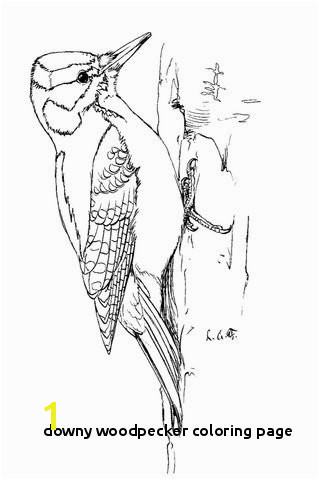 28 Downy Woodpecker Coloring Page