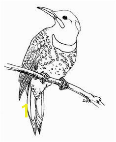Downy Woodpecker Coloring Page Pileated Woodpecker Coloring Page Elegant Downy Woodpecker Coloring