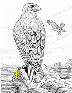 Eagle coloring page printable Animal Town Eagle free printable coloring pages animals color sheet animal coloringbook