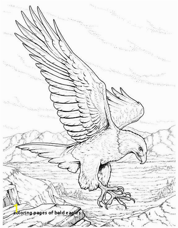 Coloring Pages Bald Eagles Wild Eagle Sketches