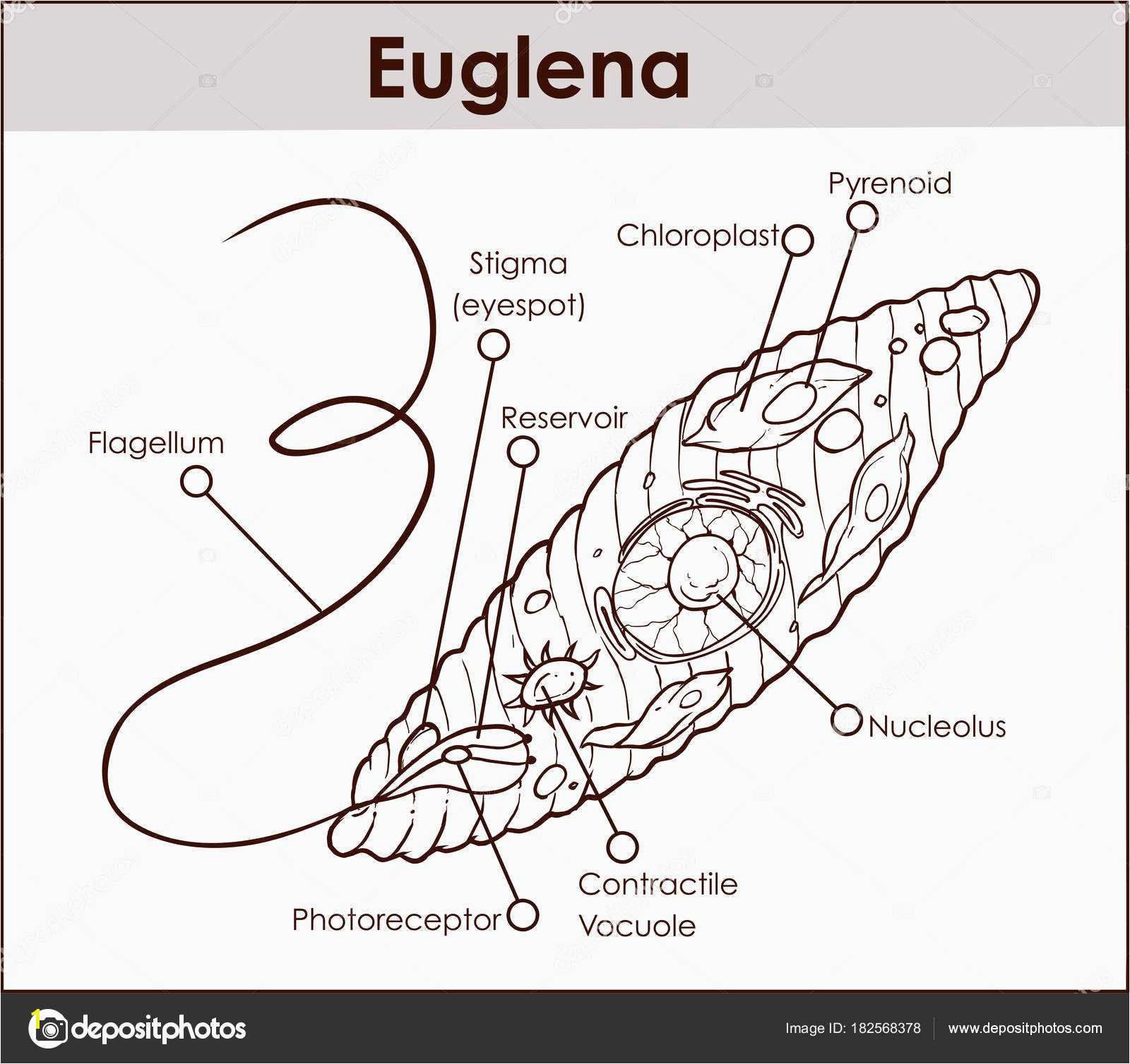 Euglena Coloring Page Biologycorner Plant Cell Coloring Luxury Approved Euglena
