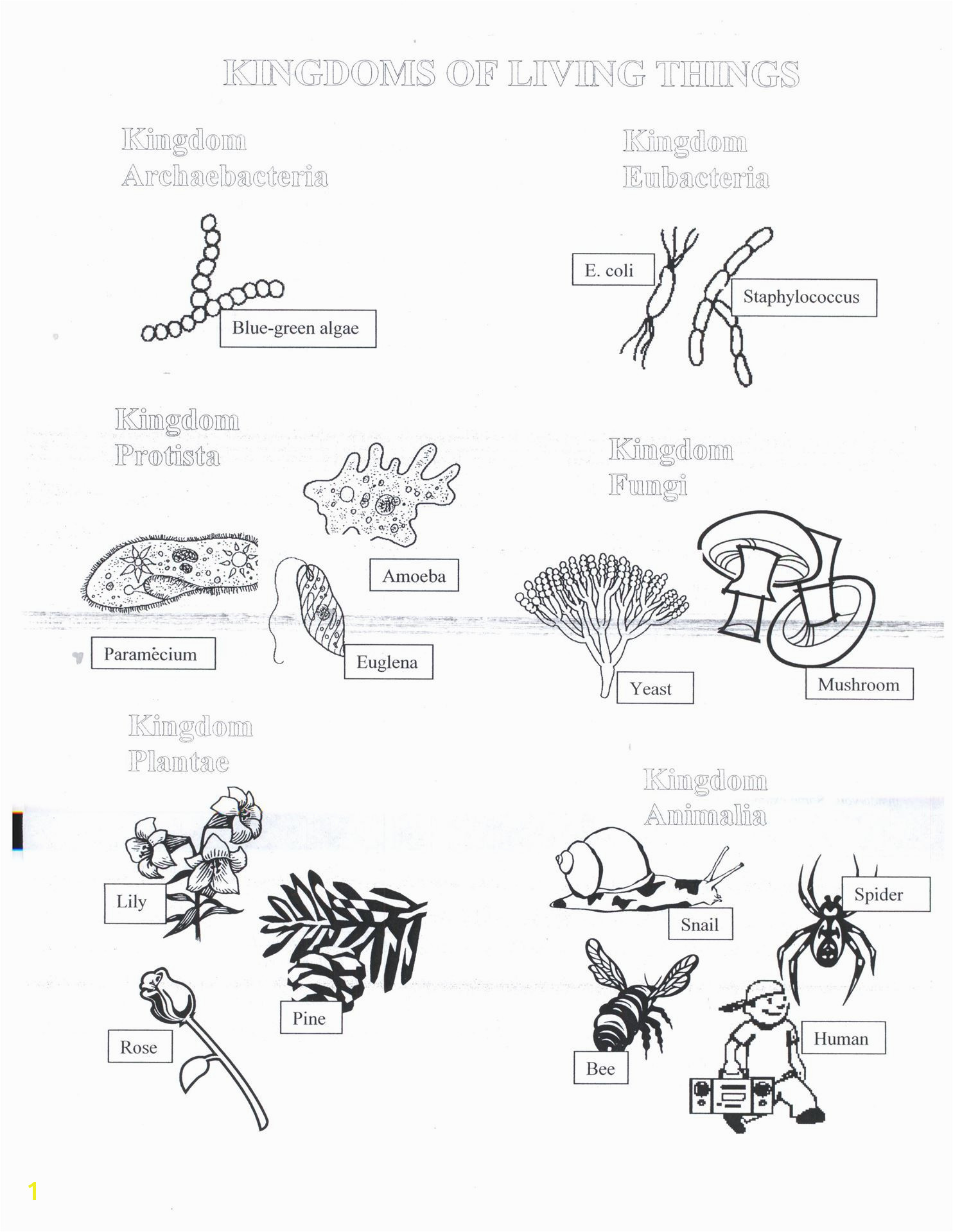 Euglena Coloring Page Approved Euglena Coloring Page Biology Corner 5325 Unknown