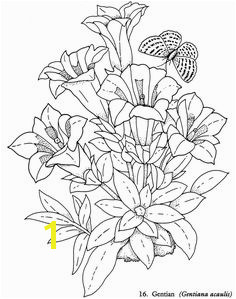 Wel e to Dover Publications Redouté Flowers Coloring Book Coloring Pages Nature Coloring Pages For
