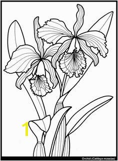Exotic Flower Coloring Pages 615 Best Z Coloring Flowers butterflies Dragonflies & Etc