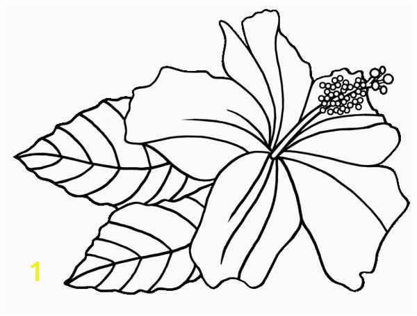 Hibiscus Flower Hawaiin Hibiscus Flower Coloring Page