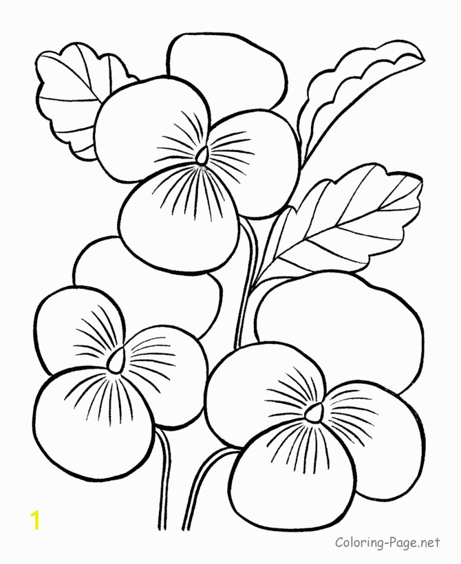 Flower coloring pages Printable coloring pictures of flowers FREE you also find it