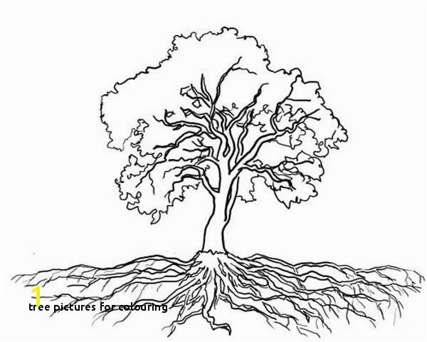 "Tree for Colouring Tree with Roots Coloring Page ""µ'€µ²'Å'' Pinterest"