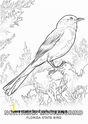 Florida State Bird Coloring Page Iowa State Bird Coloring Page Alabama State Bird Coloring Page