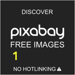 Flower Coloring Pages Hard Mandala Siyah Ve Beyaz Zendala · Pixabay De ücretsiz Resim
