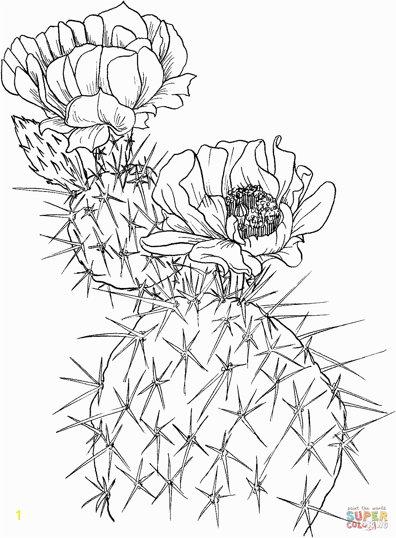 Opuntia nopal or prickly pear cactus
