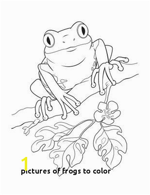 Frogs to Color Puerto Rico Coloring Pages