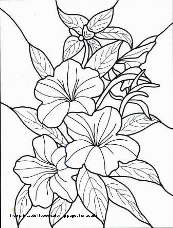 Free Printable Flower Coloring Pages for Adults Vases Flower Vase Coloring Page Pages Flowers In A