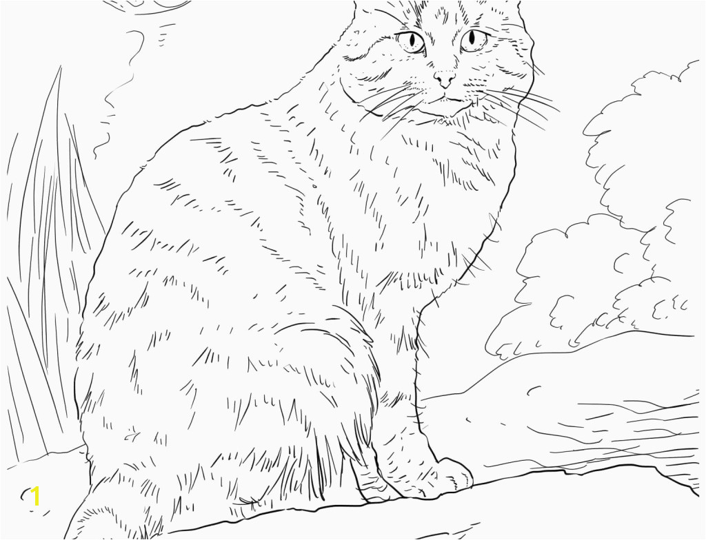 Free Printable Kitty Cat Coloring Pages Real Kitten Coloring Pages Lovely Hello Kitty Coloring Pages
