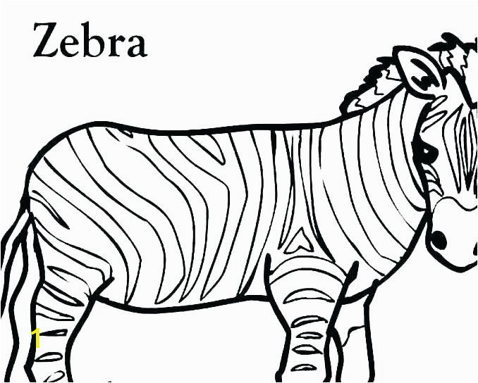 zebra color page pictures of zebras to color zebra without stripes coloring pages free