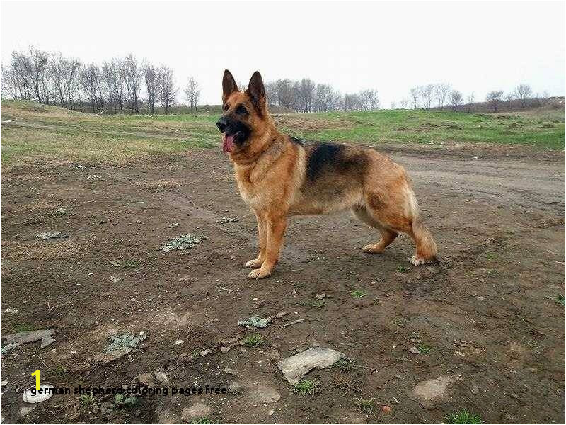 German Shepherd Coloring Pages Free astra Od Slankamena Ideas German Shepherd Coloring Pages