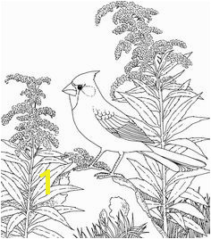 Northern Cardinal and Goldenrod Kentucky Bird and Flower coloring page from Goldenrod category Select from printable crafts of cartoons nature