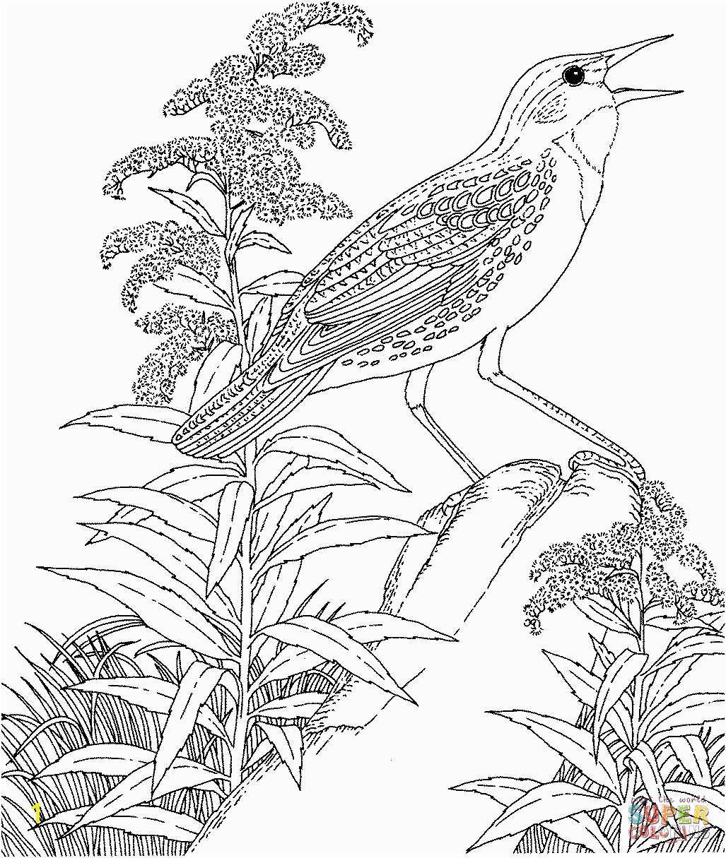 Meadowlark and Wild Sunflower Kansas State Bird and Flower Flower Coloring Pages