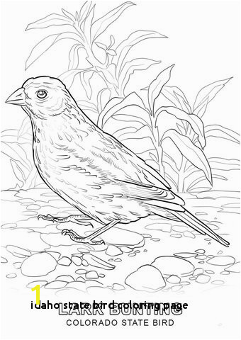 Idaho State Bird Coloring Page Alabama State Bird Coloring Page – Color Bros