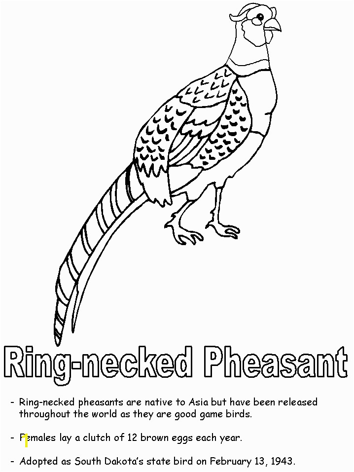 South Dakota birds images Ring necked pheasant coloring page