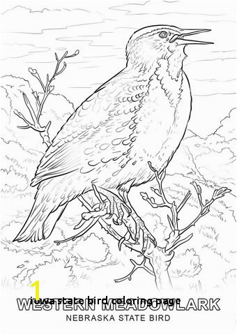 Iowa State Bird Coloring Page 28 Collection Nebraska State Drawing