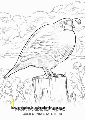 Iowa State Bird Coloring Page Nevada State Seal Coloring Page State Seal Coloring Page Coloring