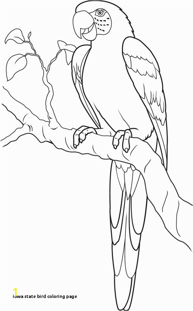 Iowa State Bird Coloring Page Parrot Coloring Page Animals town Animals Color Sheet Parrot