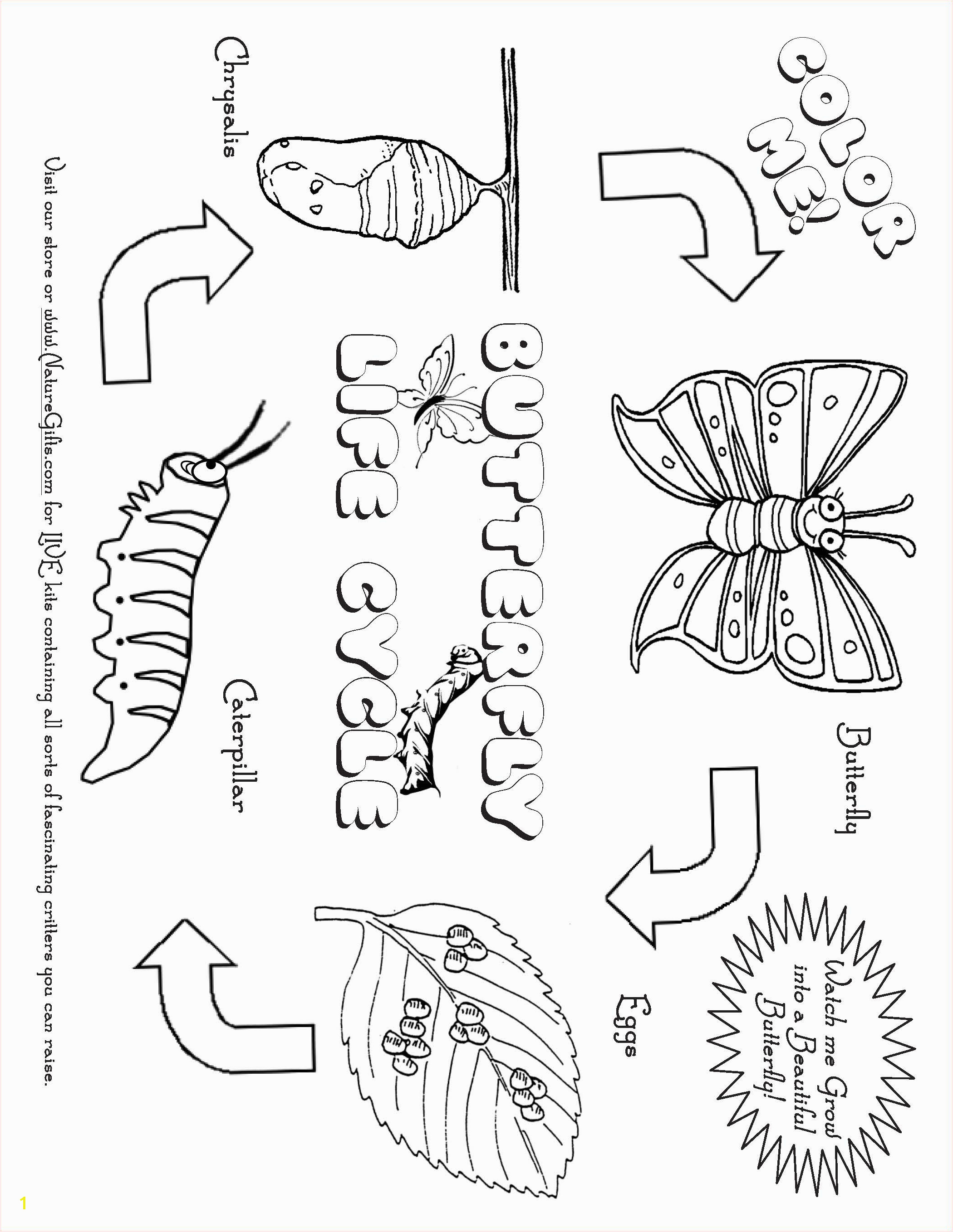 Butterfly Life Cycle Return to Butterfly Coloring Pages and Activities