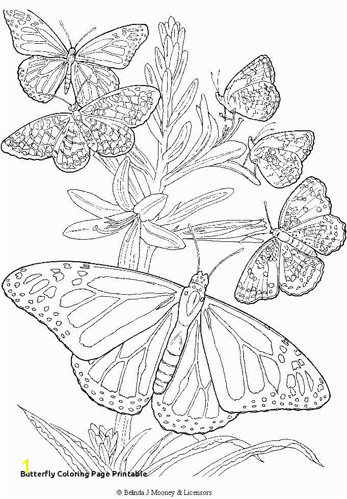 Monarch Butterfly Coloring Pages Cool And Opulent 28 Butterfly Coloring Page Printable